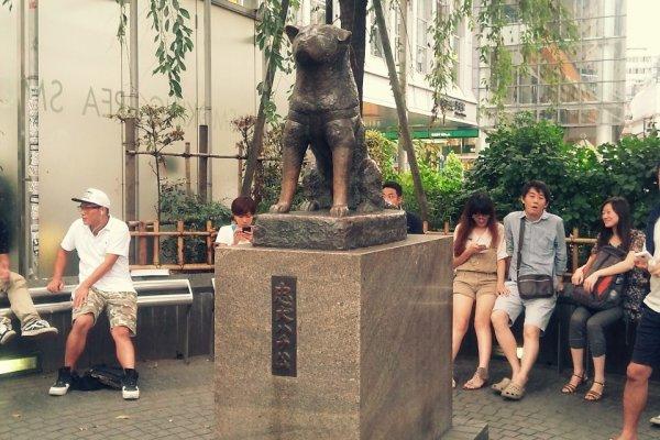 하치코 동상. 시부야의 상징이자 집합장소로 이용되고 있어요.