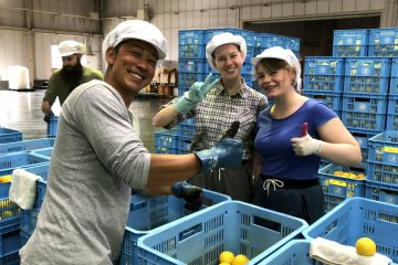 Orange harvest in Kochi: job arranged by World Unite