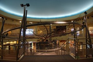 The main exhibition hall is home to this huge pear tree - it was the largest pear tree in the 20th Century in Japan