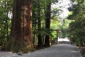 Naiku forest bridge