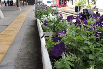 Flowers blooming at the station