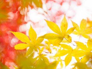 Warna-warna cerah yang menenangkan