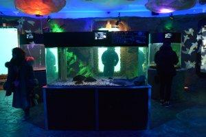 Exhibits on the undersea floor