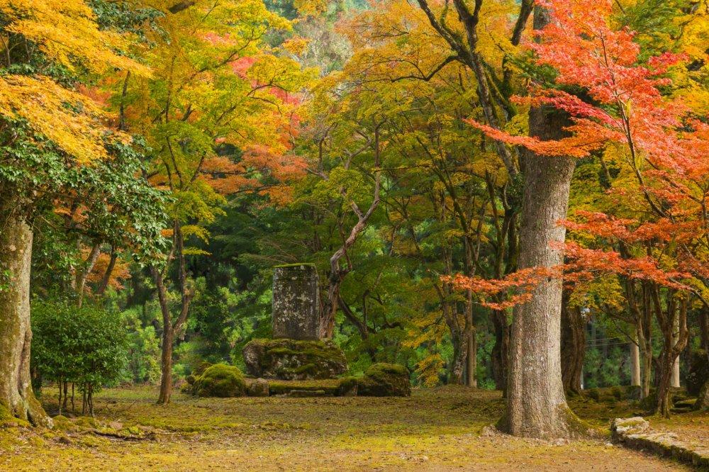 高源寺の広々とした境内。素晴らしい光景が広がる