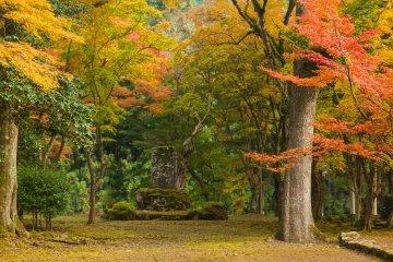 Осенняя листва в Когэндзи