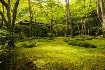 Сад мхов в храме Гиодзи
