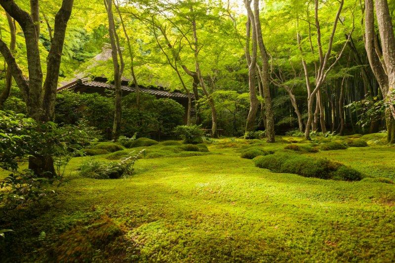 Поднимитесь по узкой тропинке и увидите утопающее в зелени строение