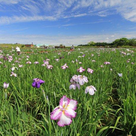 Edogawa City Ward - Parks & Gardens