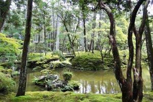 O jardim de musgo no Templo Saiho-ji