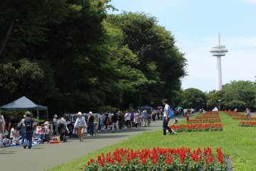 Flea Market at Tokorozawa Aviation Memorial Park
