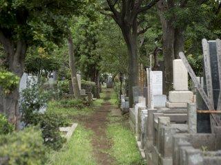 Đường dẫn hẹp giữa các ngôi mộ và các bài hát của Cicada phát ra từ những tán cây phía trên