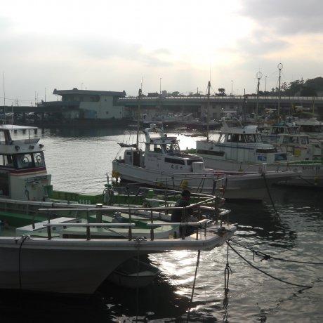 오이소 항구