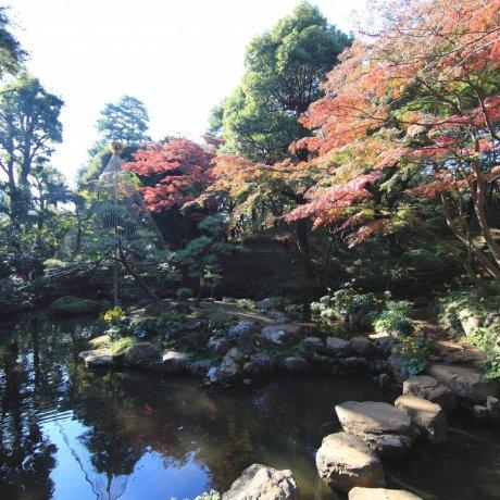 Kokubunji City - Parks & Gardens