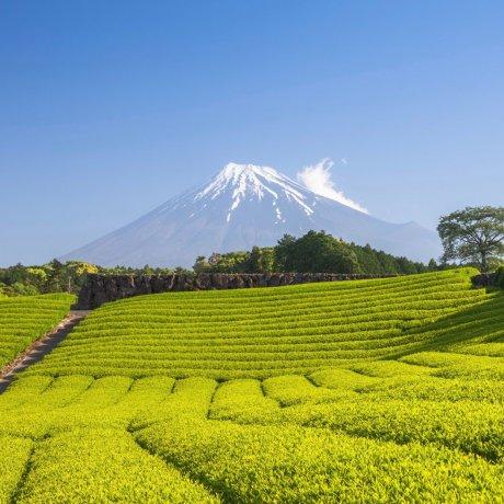 Shizuoka: Top 10 Things to Do