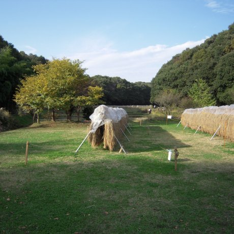 Musashimurayama City - Parks & Gardens