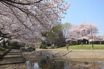 Musashino City - Parks & Gardens