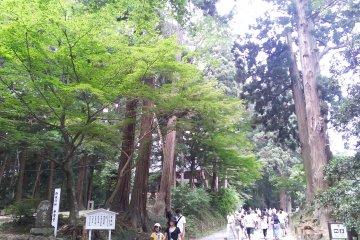 Approach up Mount Kanzan