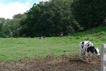 The farm. They use the fresh milk to produce their own ice cream. Yummy!