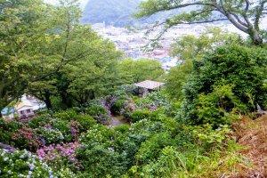 Hydrangea festival in Shimoda park, Shizuoka