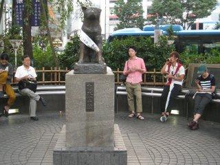 著名的忠犬八公雕像。也是涩谷站一个标志性地点。八公,日本历史上一条具有传奇色彩的忠犬。忠实憨厚的八公犬和主人的真实故事感动了无数人,主人在外捡回八公,从那以后八公每天都会准时在车站门口接主人下班,主人去世后,八公还是未曾间断地在车站口等候,直到死去,人们为了缅怀这只忠实的好狗,在它经常等候主人的涉谷车站口立了一尊雕像。
