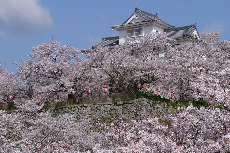 One of Japan\'s Top 100 sakura spots