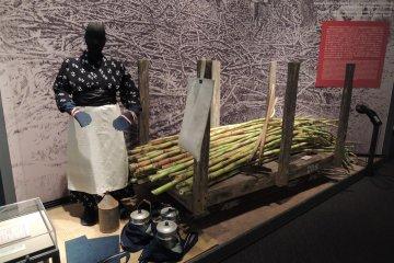 Sugar cane crop work in Hawaii