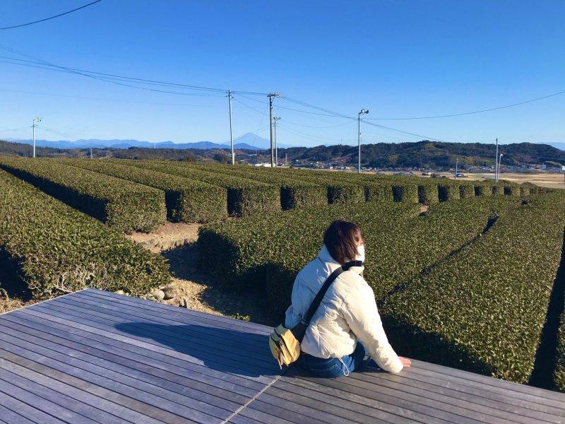 The Landscape Tea Terrace