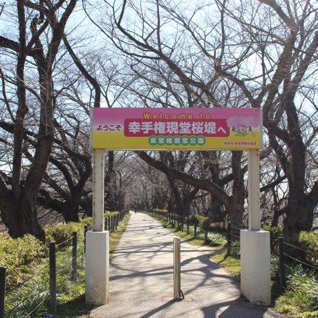 Satte Higanbana Festival