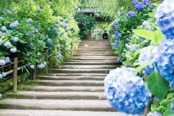 Three Must-visit Flower Temples in Japan