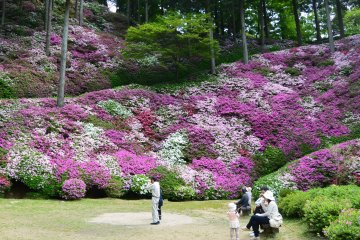 Azalea Season at Daikozenji Temple