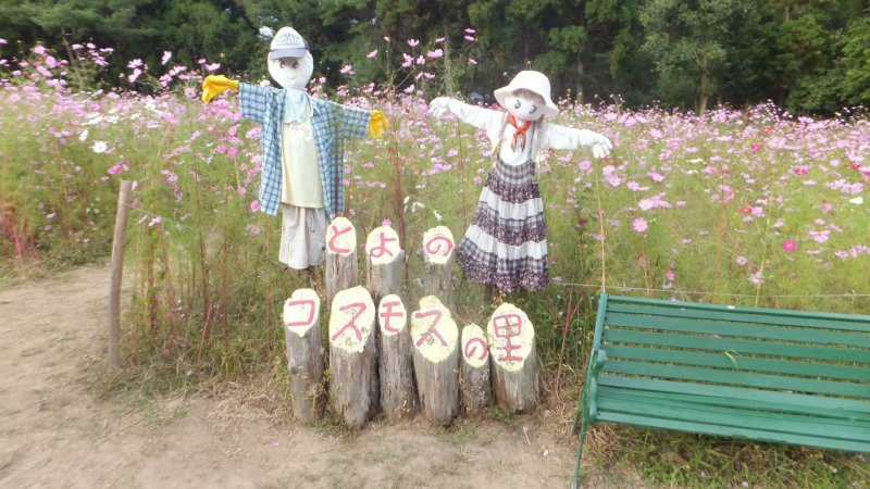 Scarecrows standing guard at the Toyono Cosmos Park