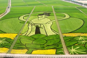 2013's rice paddy art