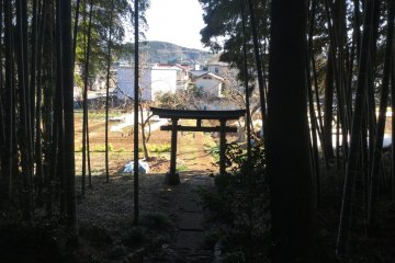 Shrine gate from within the bamboo grove