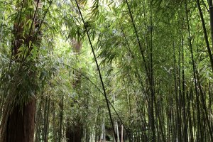 Small Bamboo Forest