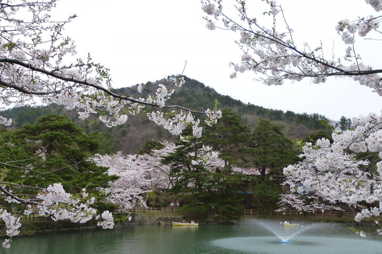 Sakura, mountains, and water views