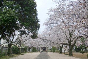 Joseki Historical Park Sakura Festival