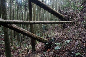 Fallen trees block the path to Kyozuka 17