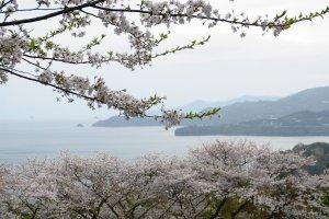 An ethereal springtime scene
