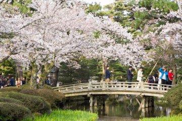 Spring at Kenrokuen, Ishikawa Prefecture