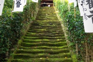 Moss-covered stairs leading to Sugimoto Dera