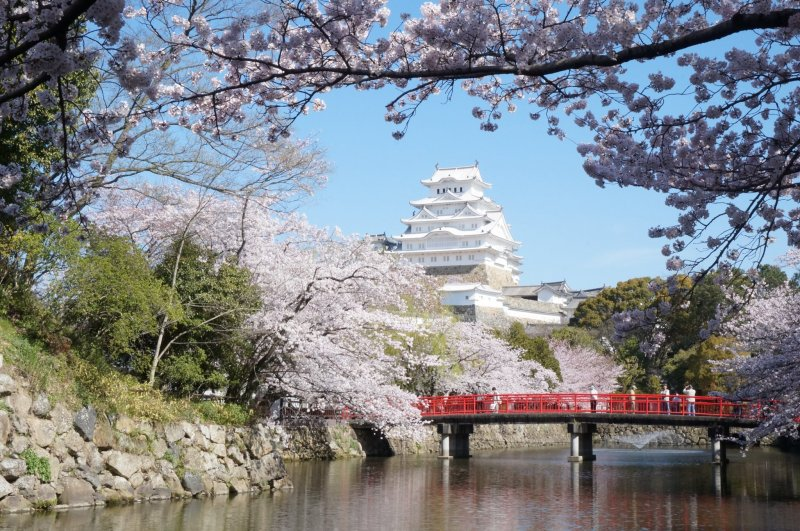 A quintessential springtime scene at Himeji Castle
