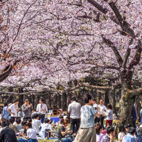 Kosten während einer Japanreise
