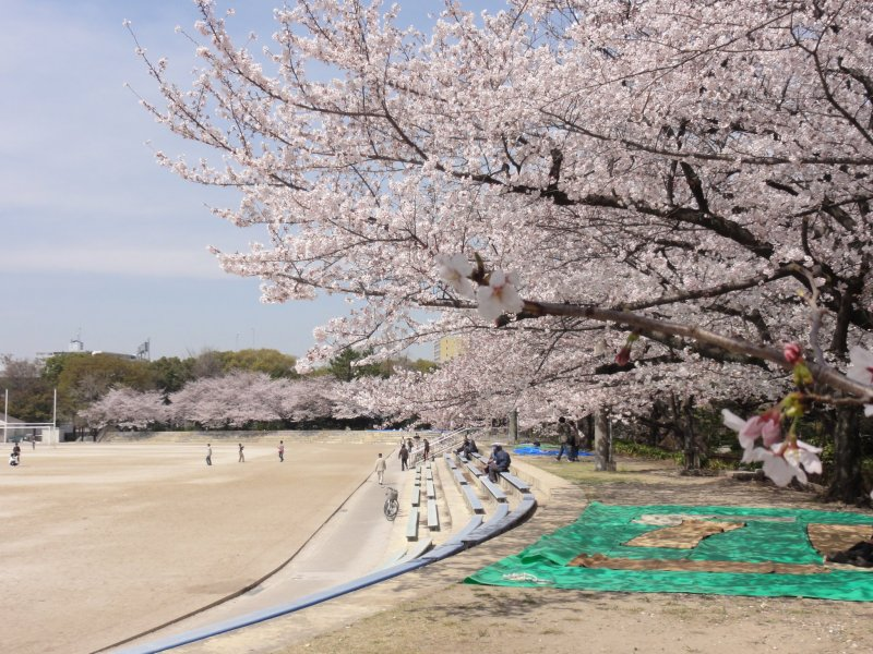 Beautiful blooms at Aichi's Tsuruma Park