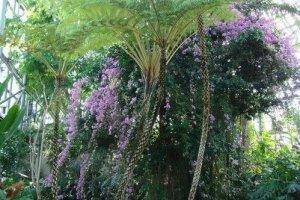 新奇的藤蔓和花朵