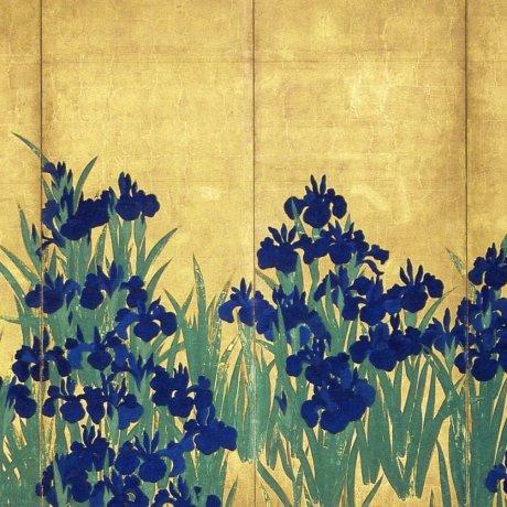 Irises: The Allure of Color