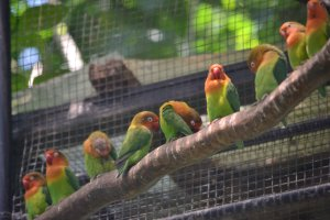 Birdlife abounds at Hamura Zoo