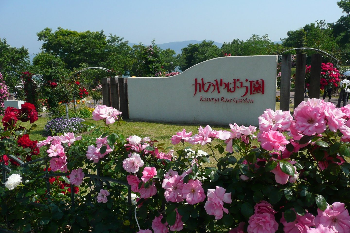 The Kanoya Rose Garden is Japan\'s largest rose garden
