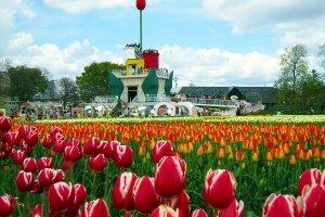 Tonami Tulip Park, Toyama