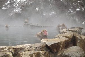 It's not far to the snow monkeys' onsen