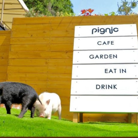 Pignic Farm & Café to Open in Akiruno